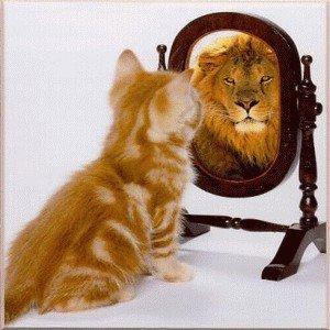 lionmirror43372077470385345639.jpg